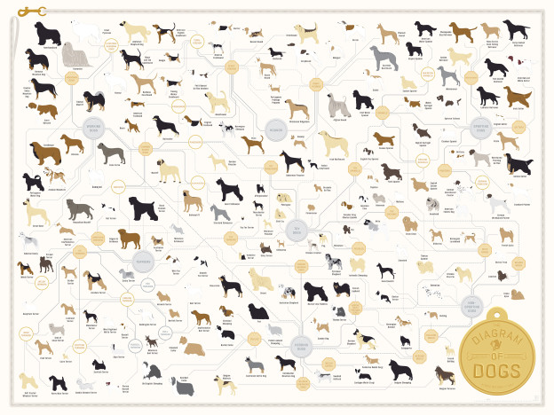 All Dogs Family Tree