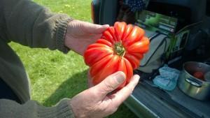 groovy tomato